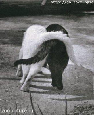 коты2