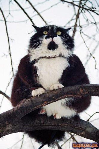 коты4