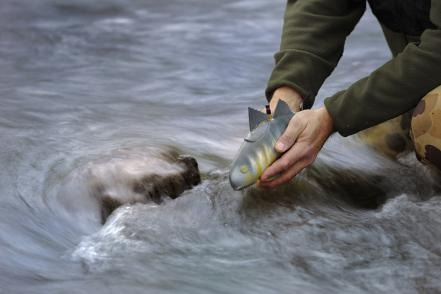 robofish-