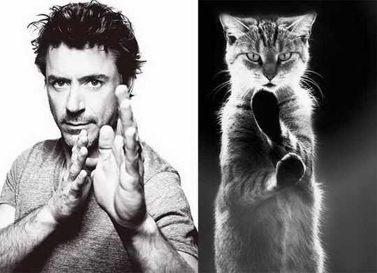 коты_мужчины__