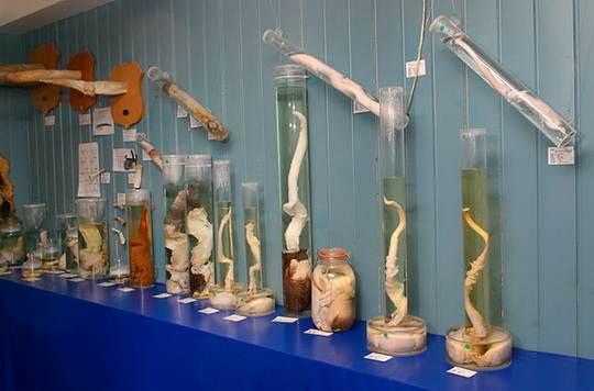 анатомические_музеи