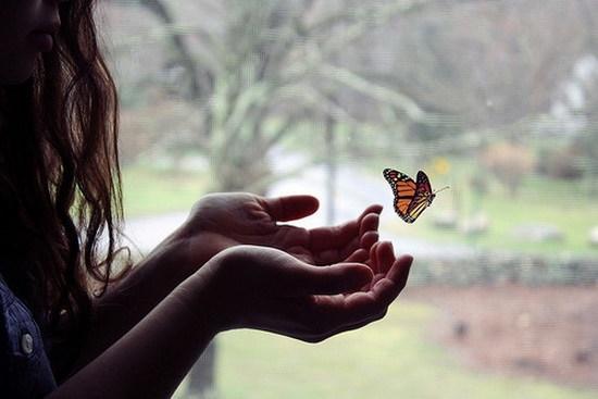 бабочка_рассказ