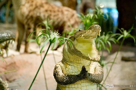 упоротый крокодил_2