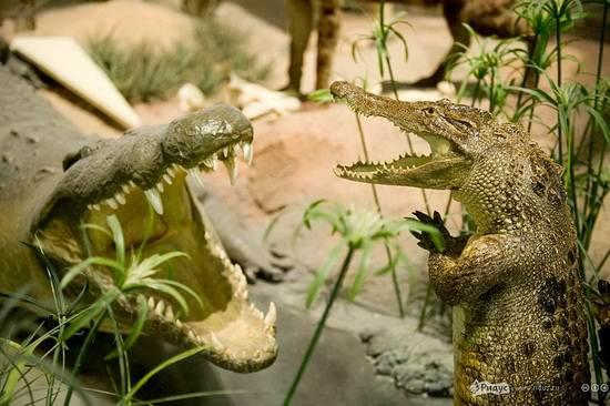упоротый крокодил_7
