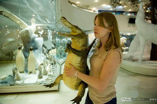 упоротый крокодил_8