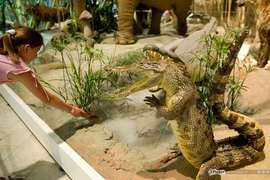 упоротый_ крокодил