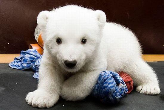 Белый малыш