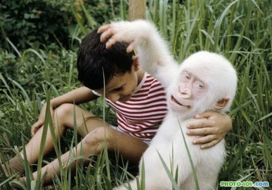 Обезьяна-альбинос
