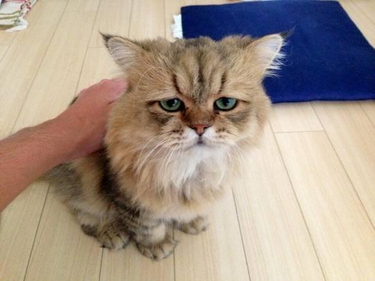 Самый грустный кот в мире.