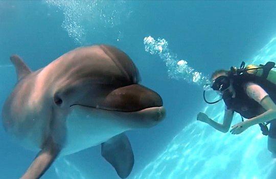 боевые_дельфины
