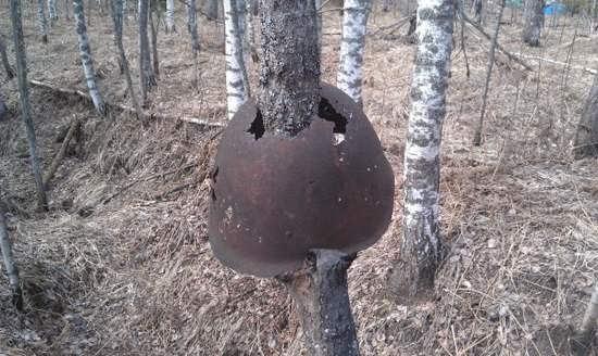 лес-8