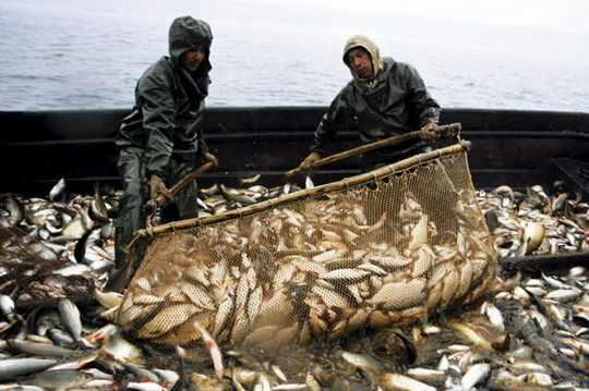 рыбный_промысел