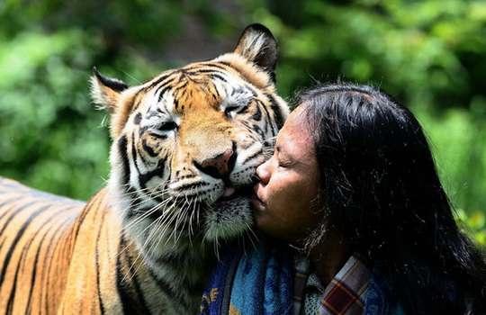 тигр_смотритель