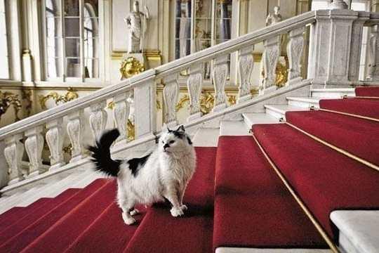эрмитаж_кот