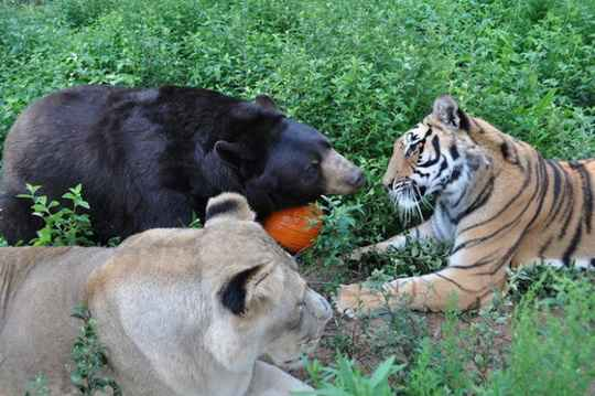 животные_дружба