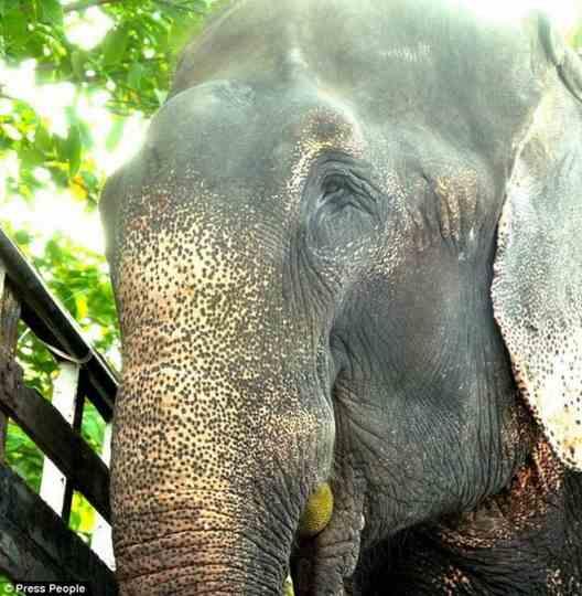слон_индия