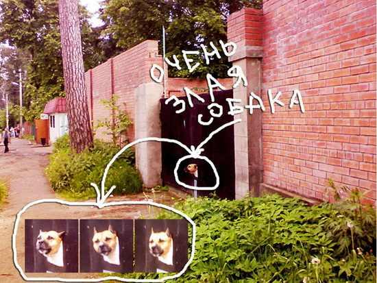 Жила-была-собака