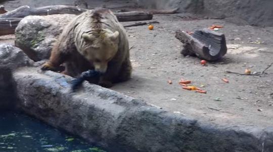 медведь_ворона