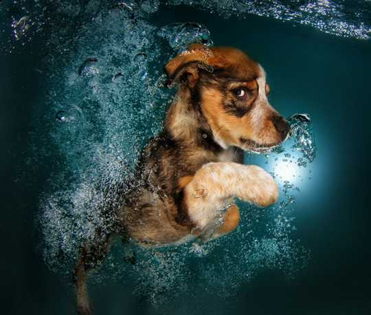 Underwater_Puppies