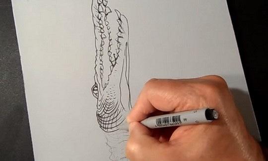 крокодил_рисунок