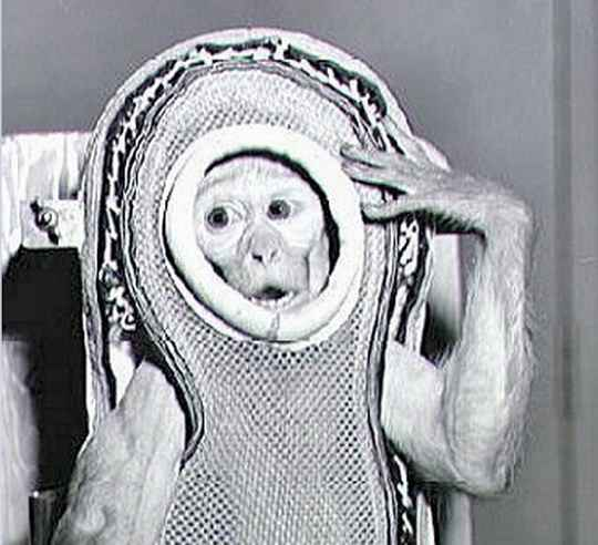 обезьяны_астронавты
