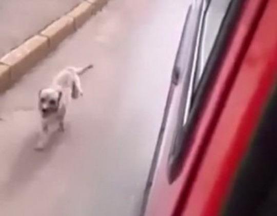 собака_машина