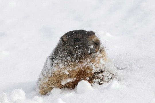 животные_холод