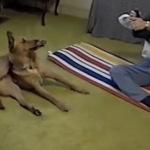 Собака занимается йогой лучше собственной хозяйки (видео)