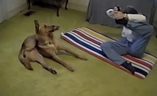 йога_пёс