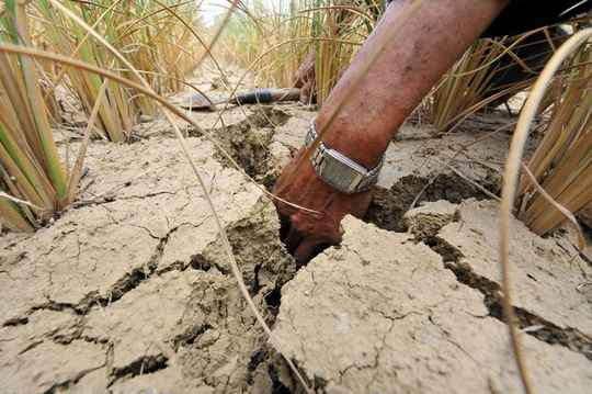 засуха+в+Китае
