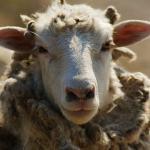 Китай построит крупнейшую в мире фабрику по клонированию животных