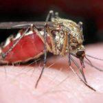 Почему чешется комариный укус