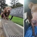 Слепая собака, которую оставили на лавочке в парке, наконец попала в добрые руки