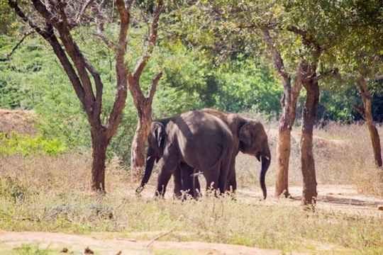 Zoopark-Indiya-1
