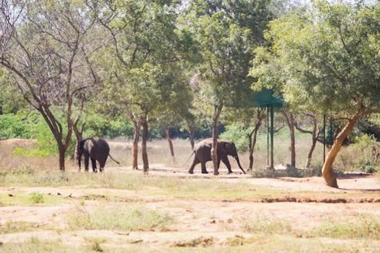 Zoopark-Indiya-7
