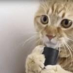 Кот, который не боится пылесоса (видео)