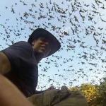 Как выглядят тысячи летучих мышей, вылетающих из одной пещеры?