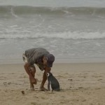 Каждый год пингвин проплывает 8000 км, чтобы повидать того, кто его спас