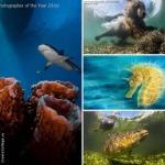 Лучшие фотографии подводного мира — 2016