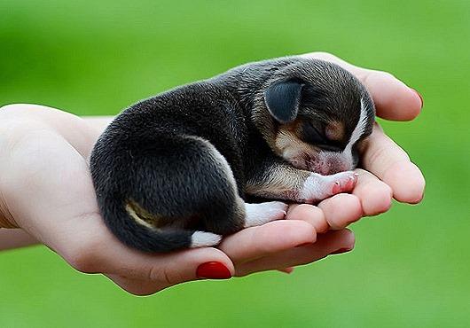 Puppy-16_thumb[1]