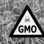 Корпоративная глобализация агробизнеса