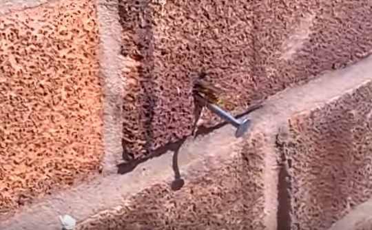 пчела-гвоздь