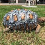Панцирь для тавмированной черепахи, распечатанный на 3D-принтере