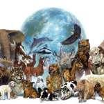 Какие животные могут спать стоя?