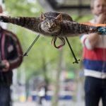 Изобретатель дрона-кота решил создать дрона-корову