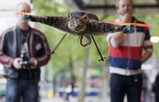 дрон-кот