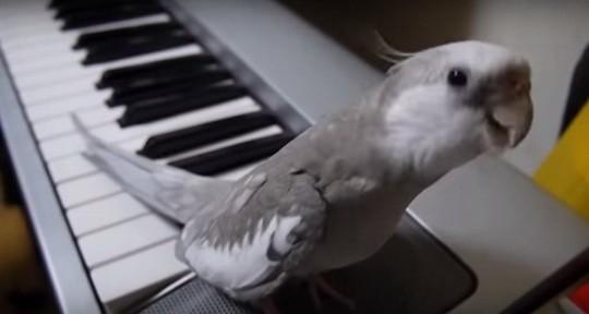 Этот милый попугай по кличке Поко удивил своих хозяев своими дарованиями.