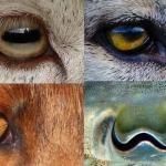 Каким образом форма зрачка животного зависит от его образа жизни?