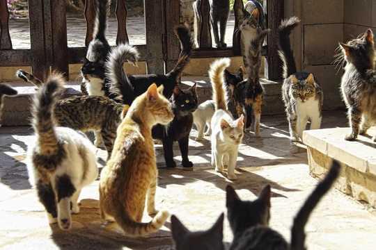 Кипр – это рай для кошек. Кошек здесь можно найти практически везде.