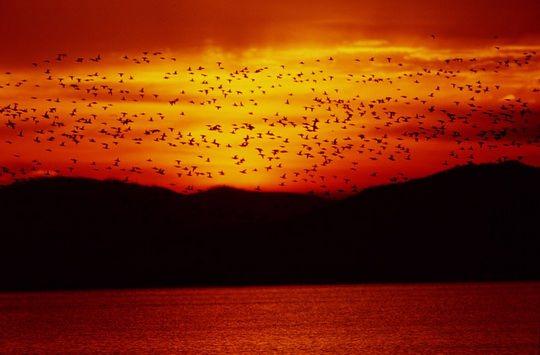 Для большинства птиц многочасовой полет – и тот очень труден.